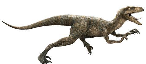 Velociraptor | Dinosaur Wiki | FANDOM powered by Wikia