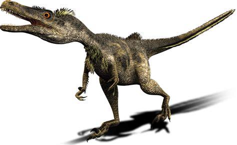 Velociraptor   Dinosaur Wiki
