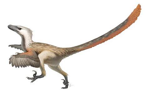 Velociraptor Dinosauro carnivoro del Cretaceo   Dinosauri 360