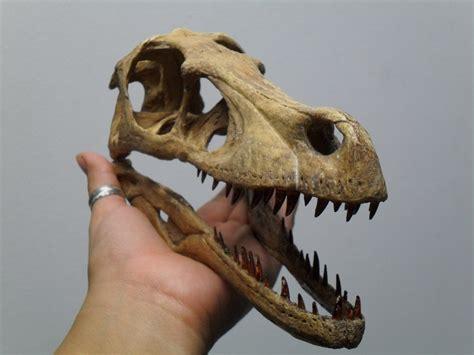 Velociraptor   Extinct Animals