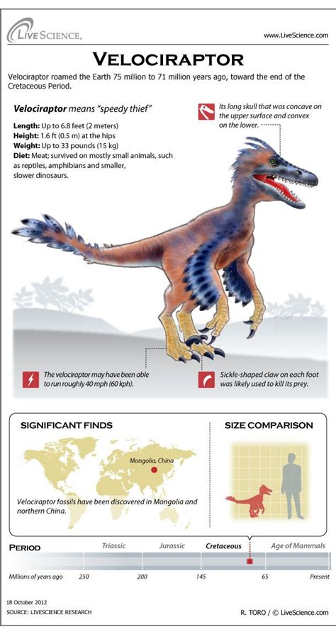 Velociraptor: Facts About the  Speedy Thief  in 2020 ...