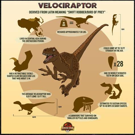 Velociraptor Facts   Dino s   Pinterest