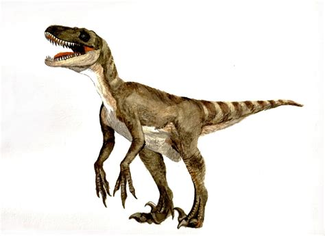 velociraptor facts feathers – Dinosaurs Pictures and Facts