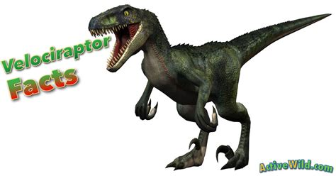 Velociraptor Facts for Kids, Students & Adults With ...
