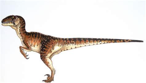 Velociraptor Facts, Habitat, Pictures and Diet   Extinct ...
