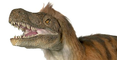 Velociraptor history and some interesting facts