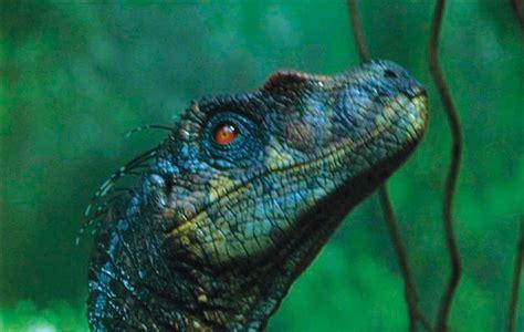 velociraptor jurassic park   Google Search | Raptor Squad ...