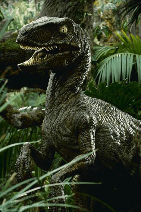 Velociraptor | Jurassic park poster, Jurassic park ...