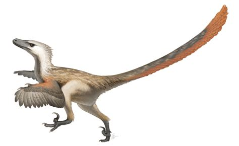 Velociraptor: Quick Facts   Owlcation   Education