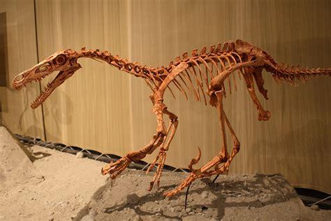 Velociraptor — Wikipédia