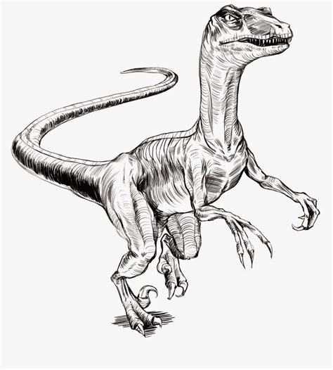 Velociraptor | Tu web especializada en dinosaurios