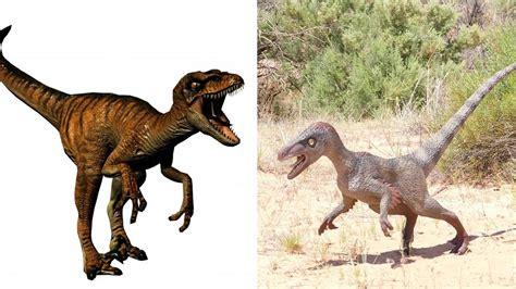Velociraptor   Tu web especializada en dinosaurios