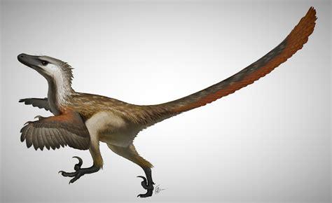 Velociraptor | Wiki Prehistórico | Fandom