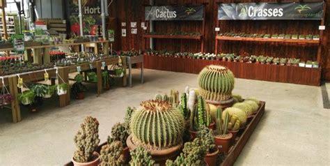 Venda de cactus a Barcelona   Garden Catalunya Plants