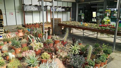 Venda de cactus a Barcelona | Garden Catalunya Plants
