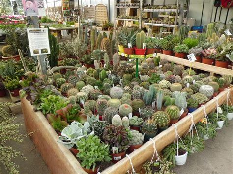 Venda de cactus a Barcelona | Garden Center Catalunya ...
