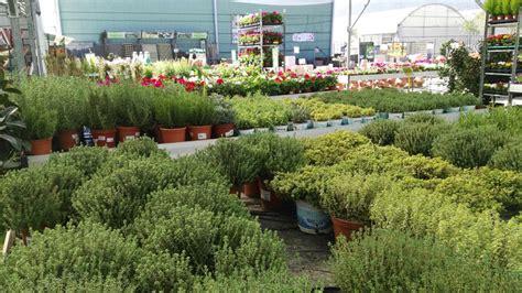 Venda de Plantes Aromàtiques a Barcelona | Garden ...