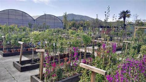 Venda de Plantes Enfiladisses a Barcelona   Garden ...