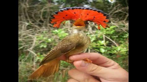 Venta De Aves   SEONegativo.com