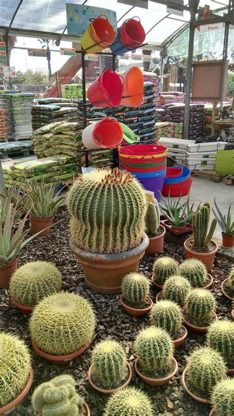 Venta de Cactus en Barcelona | Garden Catalunya Plants ...
