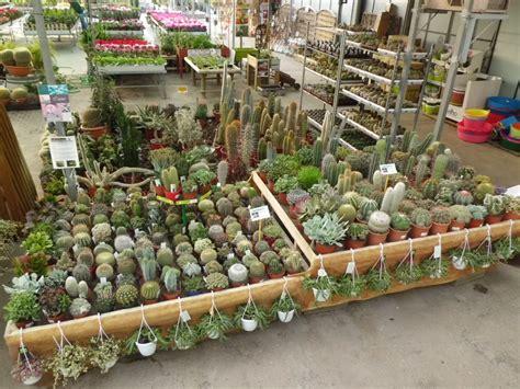 Venta de Cactus en Barcelona | Garden Center Catalunya ...
