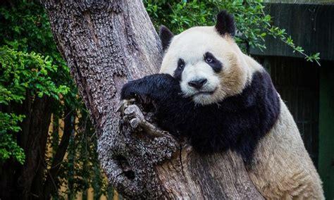 Venta de Entradas Zoo Aquarium De Madrid Online –Madrid ...