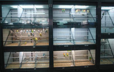 Venta de pájaros  canarios, agapornis...  en Barcelona ...