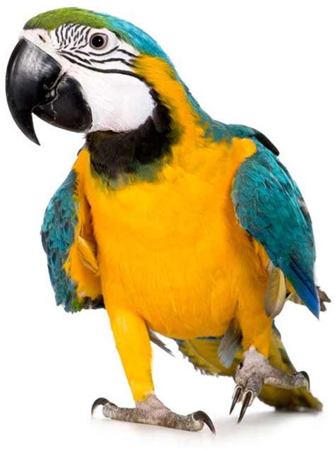 Venta de pájaros  canarios, loros, cotorras, agapornis ...