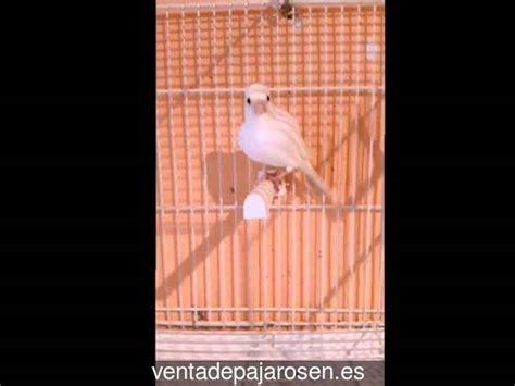 Venta de pajaros en Agullana , Girona   Venta De Pajaros