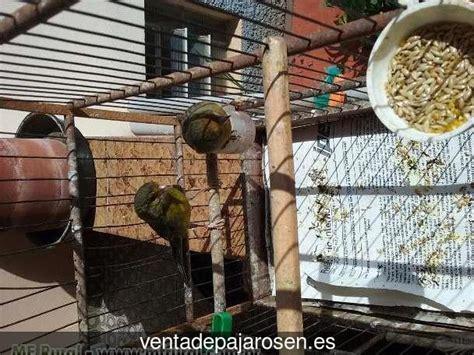 Venta de pajaros en Iurreta , Vizcaya   Venta De Pajaros