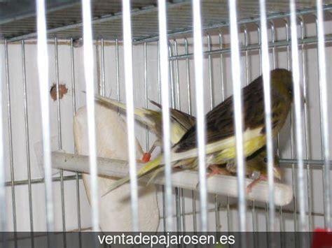 Venta de pajaros en Minas de Riotinto , Huelva   Venta De ...