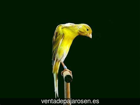 Venta de pajaros en Sanlúcar de Guadiana , Huelva   Venta ...