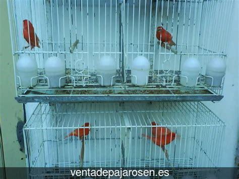 Venta de pajaros en Valdemorillo , Madrid   Venta De Pajaros