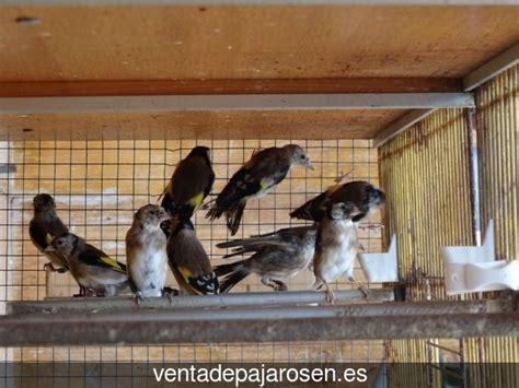 Venta de pajaros en Villares de Jadraque , Guadalajara ...