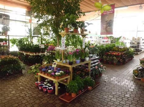 Venta de Plantas de Interior en Barcelona | Garden Center ...