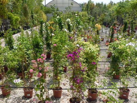 Venta de Plantas Trepadoras en Barcelona | Garden ...