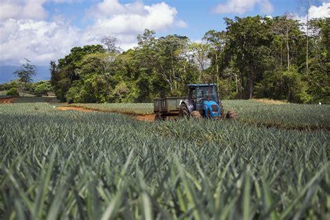 Ventajas de la agricultura de precisión en el cultivo de ...