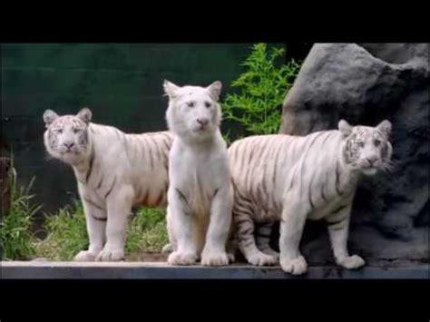 Ver Locos sueltos en el zoo Película Completa Español ...