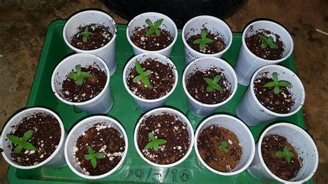 Verduras de auto semilla: Razones para plantar vegetales ...