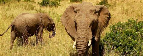 Viajar a Kenia | Bamba Project   Social Adventure