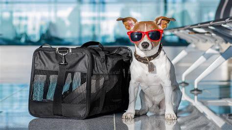 ¿Viajar con mascotas? Desde 2021, ya no será tan fácil ...