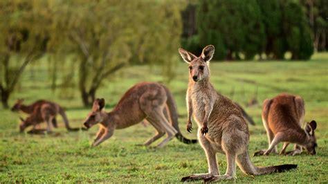 Viaje a Australia, hogar del canguro y el koala