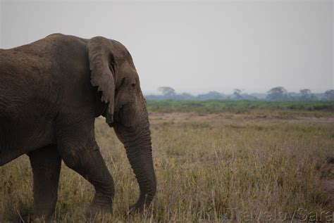 Viaje a Kenia: descubriendo el Parque Nacional de Amboseli ...