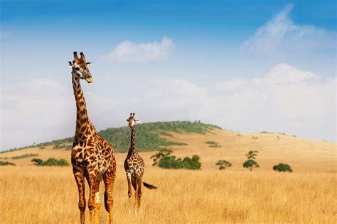 Viaje a Kenya. A medida. Safari Madoadoa. Con extensiones ...