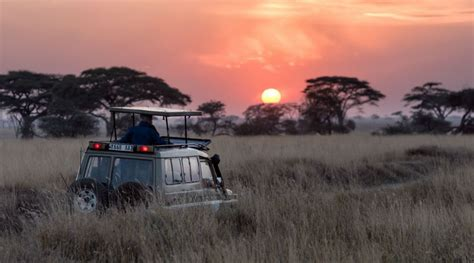 Viaje de Safari a Tanzania y Kenia: ¡Una Experiencia Única!