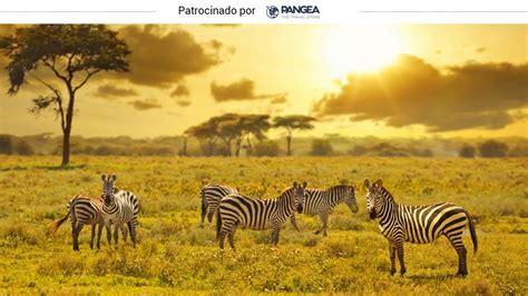 Viajes en el mundo: Safaris en Kenia: rutas entre animales ...