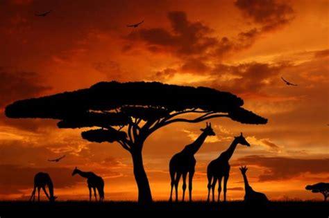 Viajes por todo el mundo: Kenia sorprendente y Zanzíbar ...
