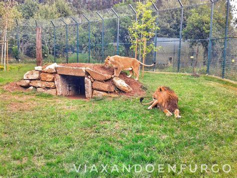 Viaxando en furgo: PORTUGAL: Zoo de Santo Inácio en ...