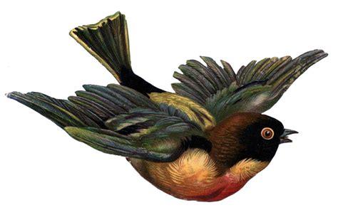 Victorian Scrap Clip Art   Flying Bird   The Graphics Fairy