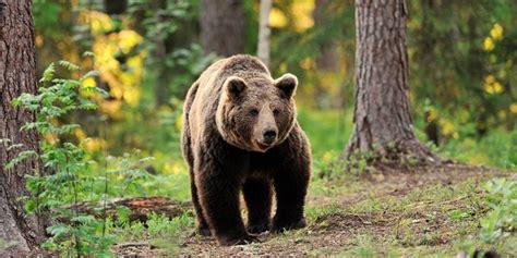 [VIDEO] Calles desiertas en España atrajeron a un oso ...